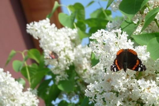fiori nel giardino del B&B casa sul lago