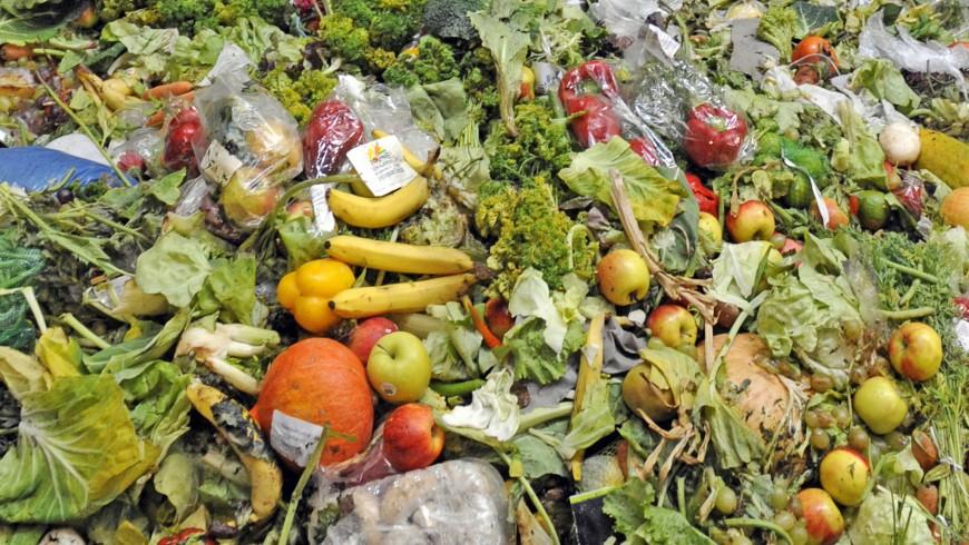 sprecare cibo: residuo organico