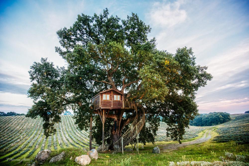 Casa sull'albero Suite Bleue, Agriturismo biologico La Piantata, Viterbo