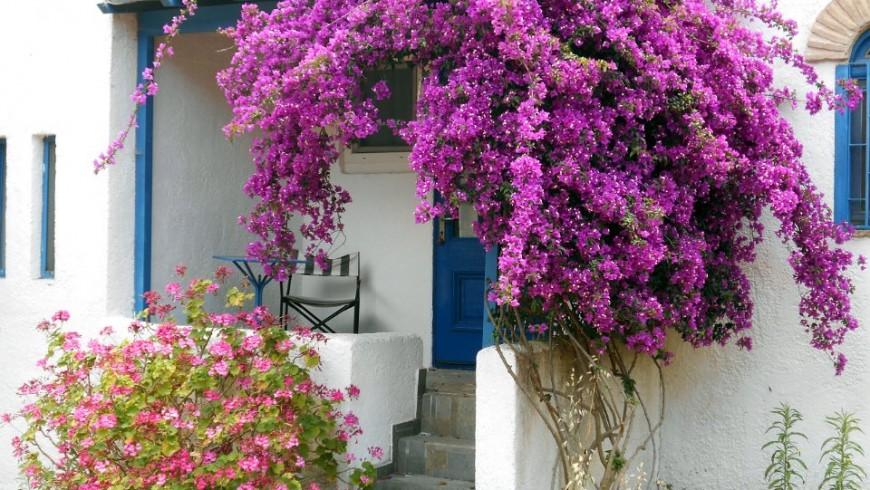 Ingresso casa, facciata bianca, porta e infissi blu, fiori viola rampicanti