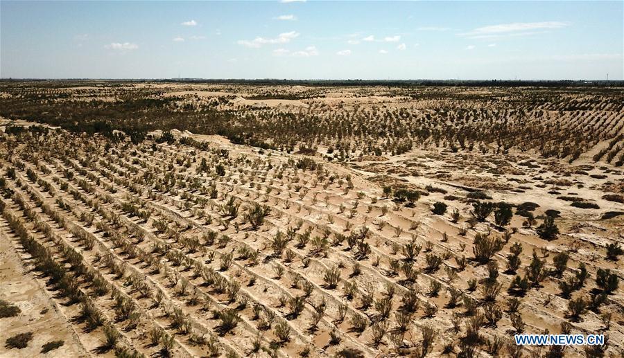 griglia di piantine nel deserto