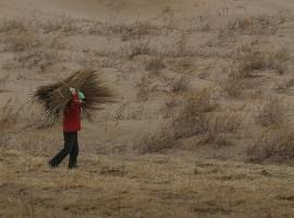 uomo trasporta dei rami nel deserto