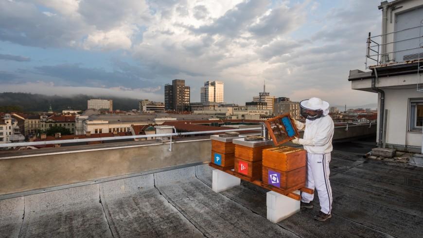 un apicoltore sul tetto di un palazzo a ljubljana