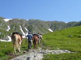 cavalli nei monti
