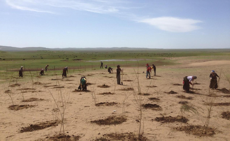 persone piantano alberelli nel deserto