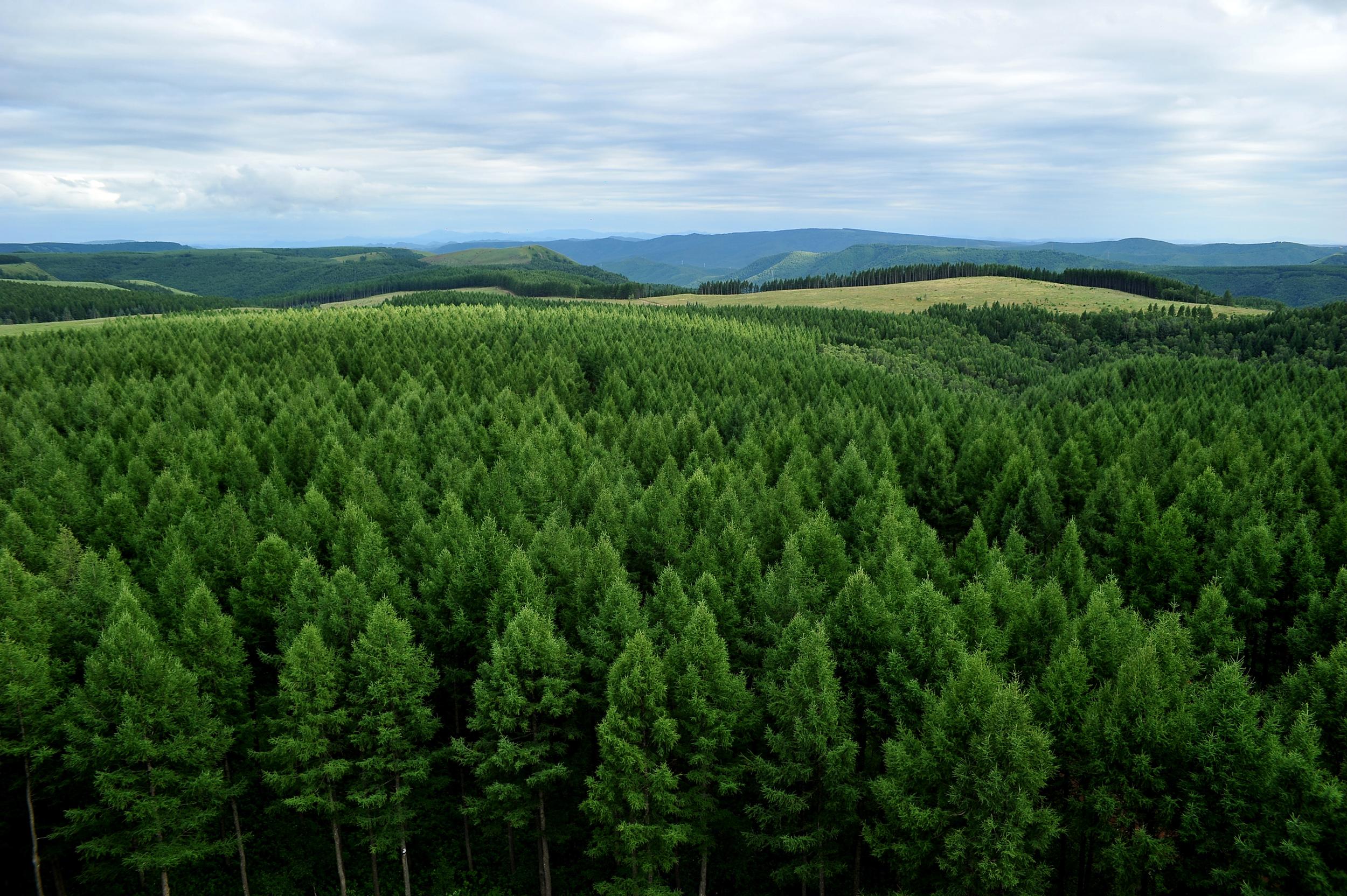 vasta distesa di alberi e colline