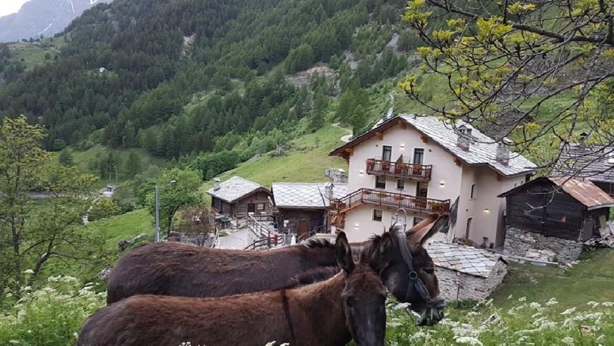 Alpe Rebelle, vacanze con cucina vegetariana a Bionaz, Valle d'Aosta