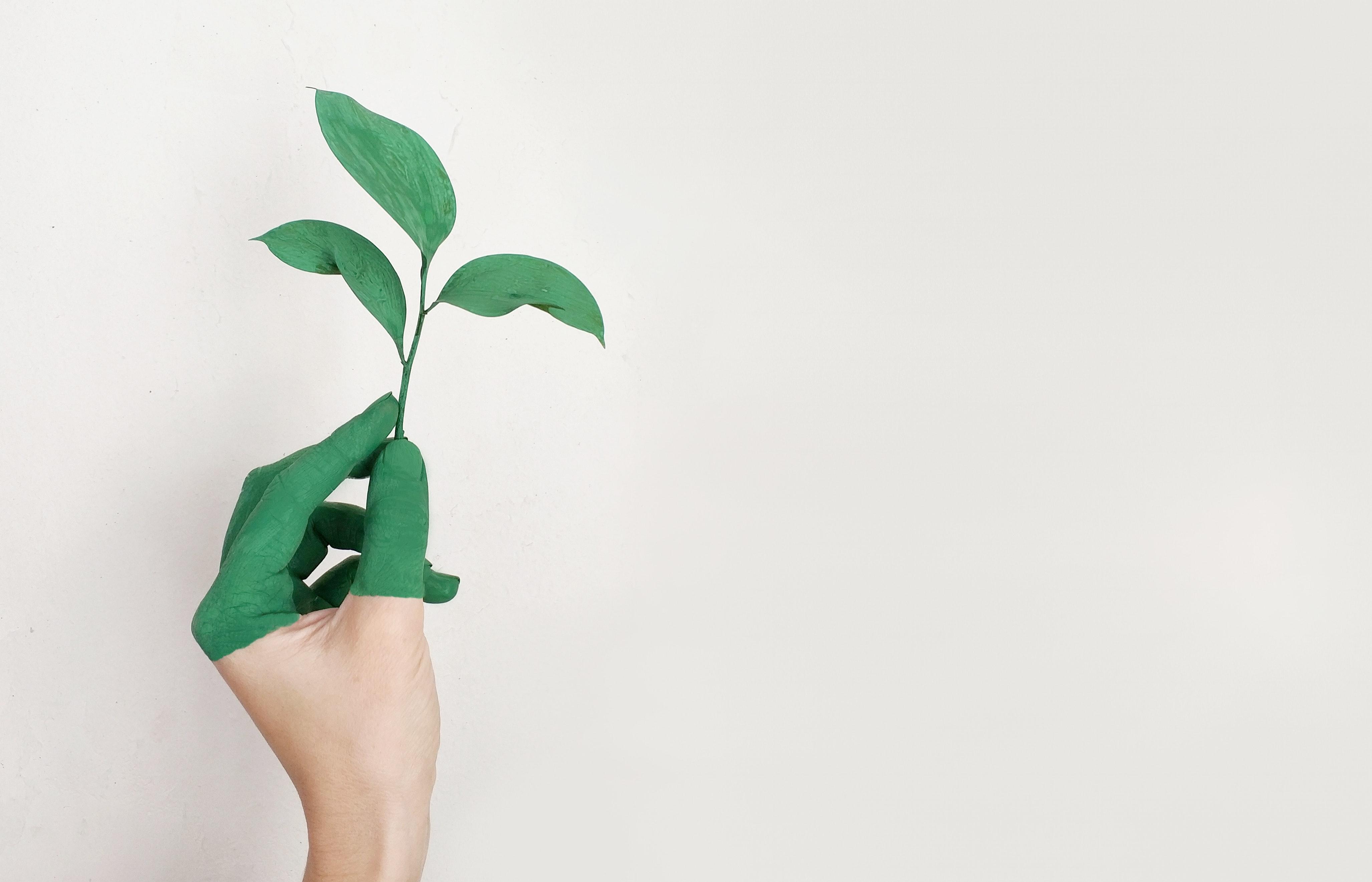 Mano verde con una foglia metafora di ecologia