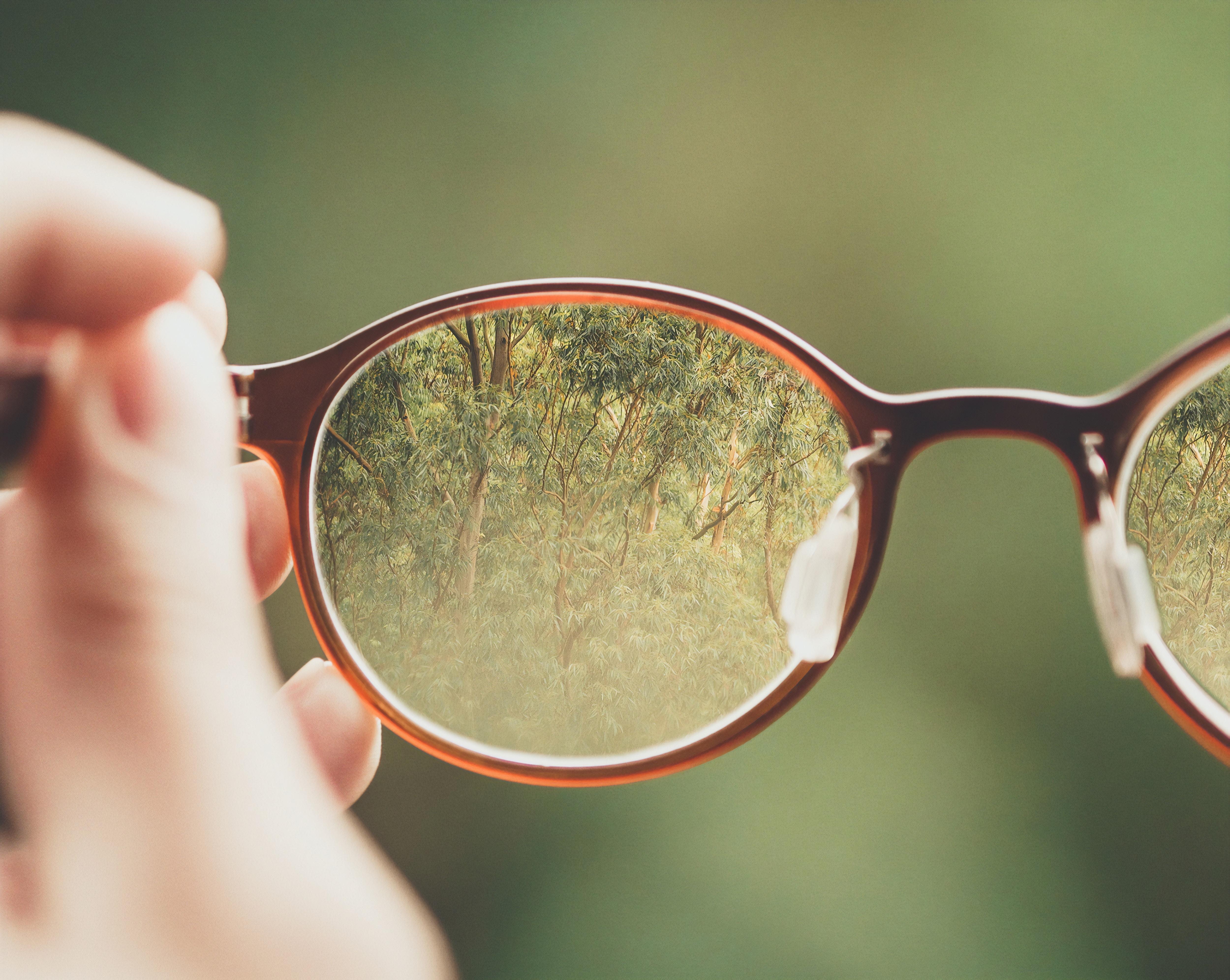 occhiali da vista che ingrandiscono una foresta