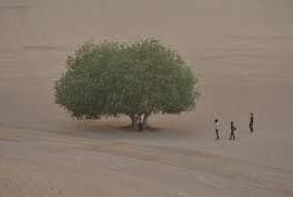 albero rimasto circondato dal deserto