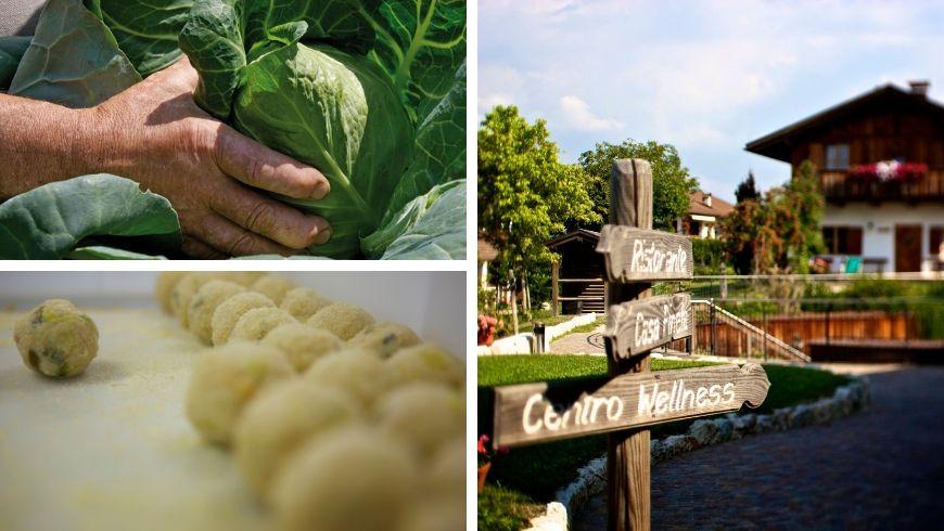 pineta hotels, hotel eco-friendly che offre cucina vegana e vegetariana