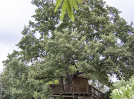 Fattoria la prugnola casa sull'albero