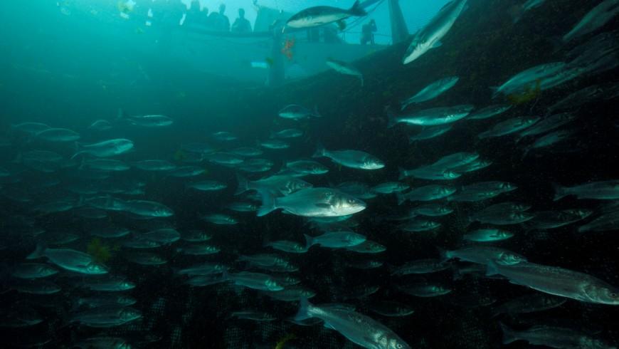 allevamento ittico fonda slovenia