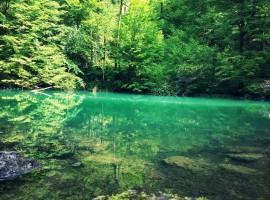fiume kupa nel fitto della foresta