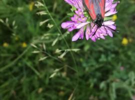 farfalla nella valle delle farfalle fiume kupa