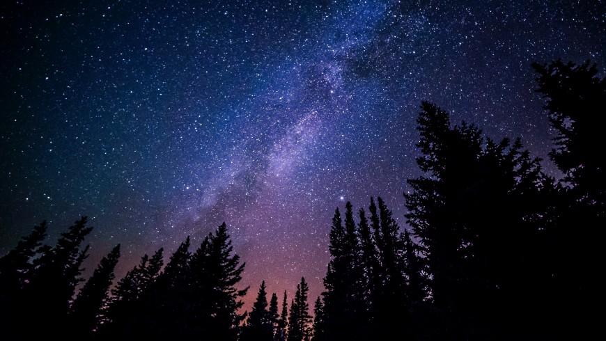 cielo stellato tra gli alberi, immersione nella natura