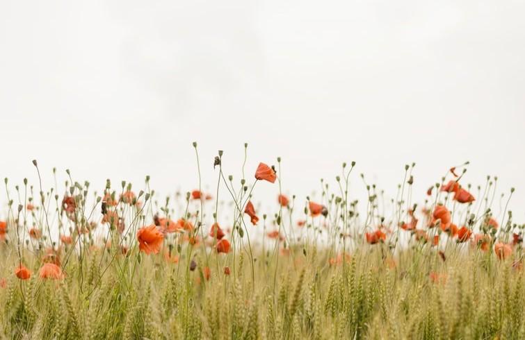 fiori nell'agricoltura per non usare pesticidi