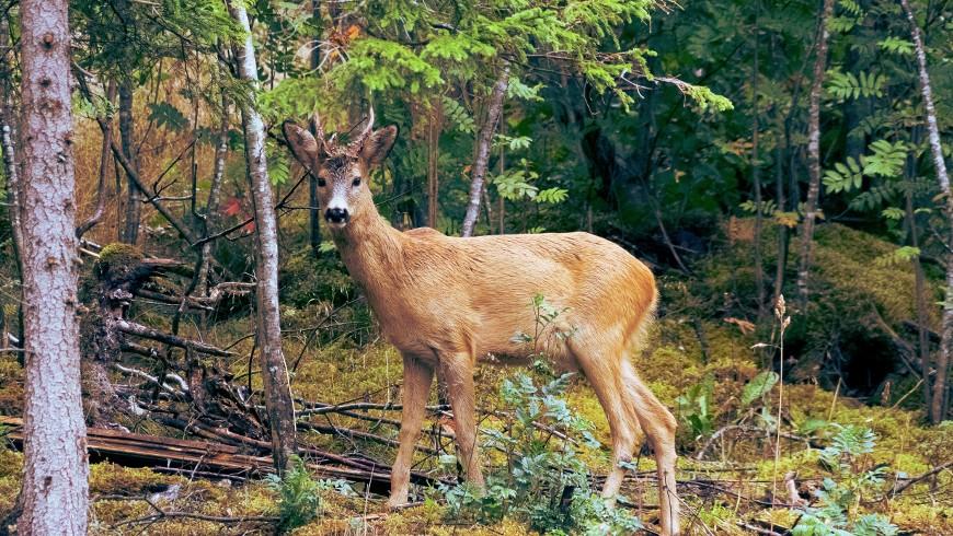 animale nei boschi
