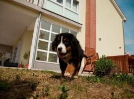 appartamenti luana cane