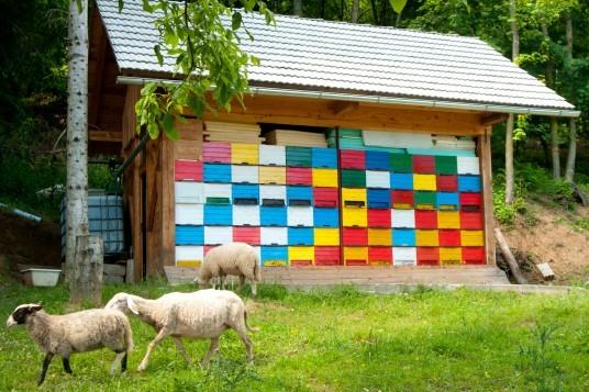 apiturismo, vacanze al miele in Slovenia