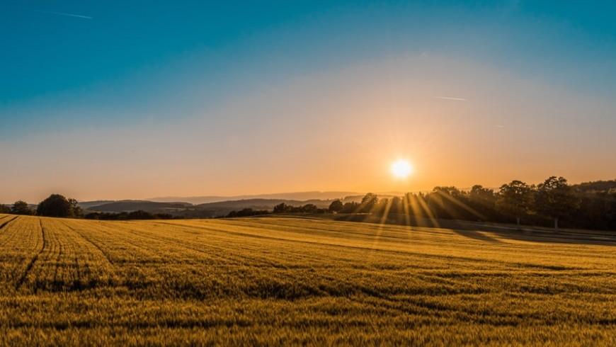 campo coltivato al tramonto, agricultura biologica