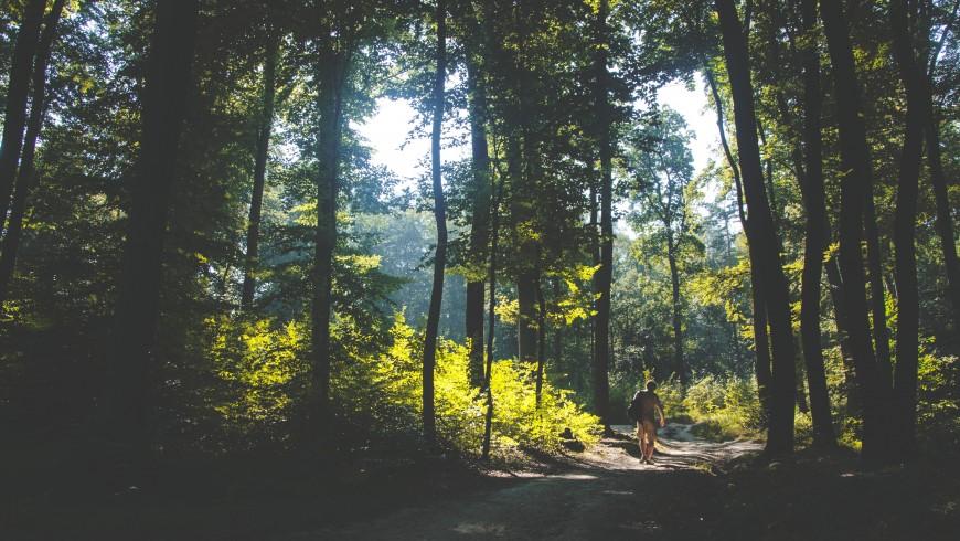 contatto con la natura nel verde dei boschi