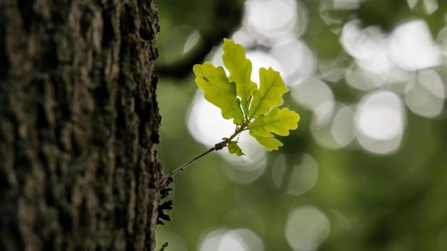 corteccia di un albero, forest bathing