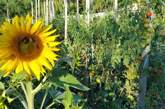Tourist Farm Pri Andrejevih interno