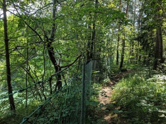 natura circostante al fiume