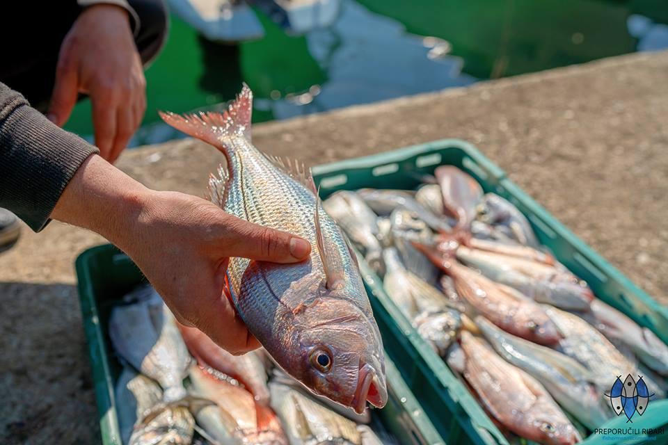 pescato del giorno di fronte al mare