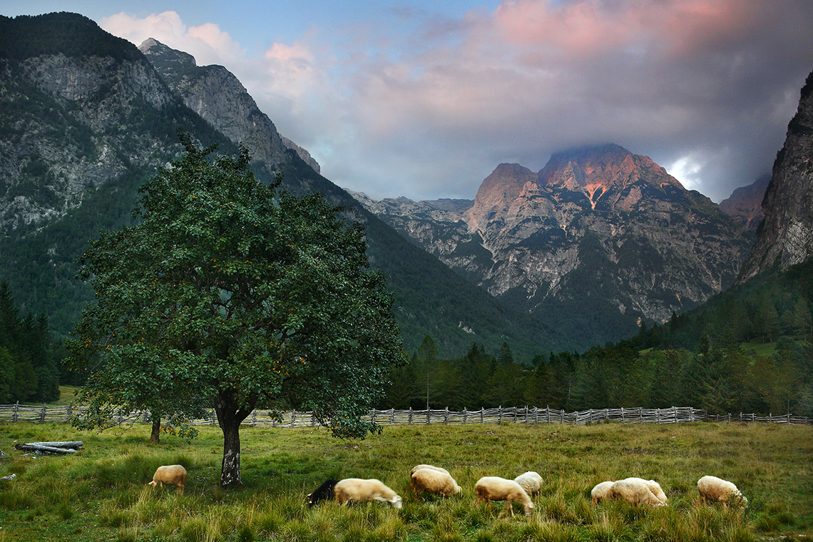 Fattoria biologica in Slovenia