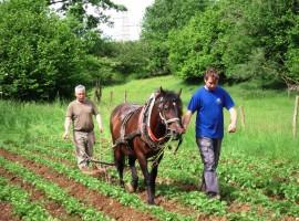 Tourist Farm Pri Andrejevih cavalli
