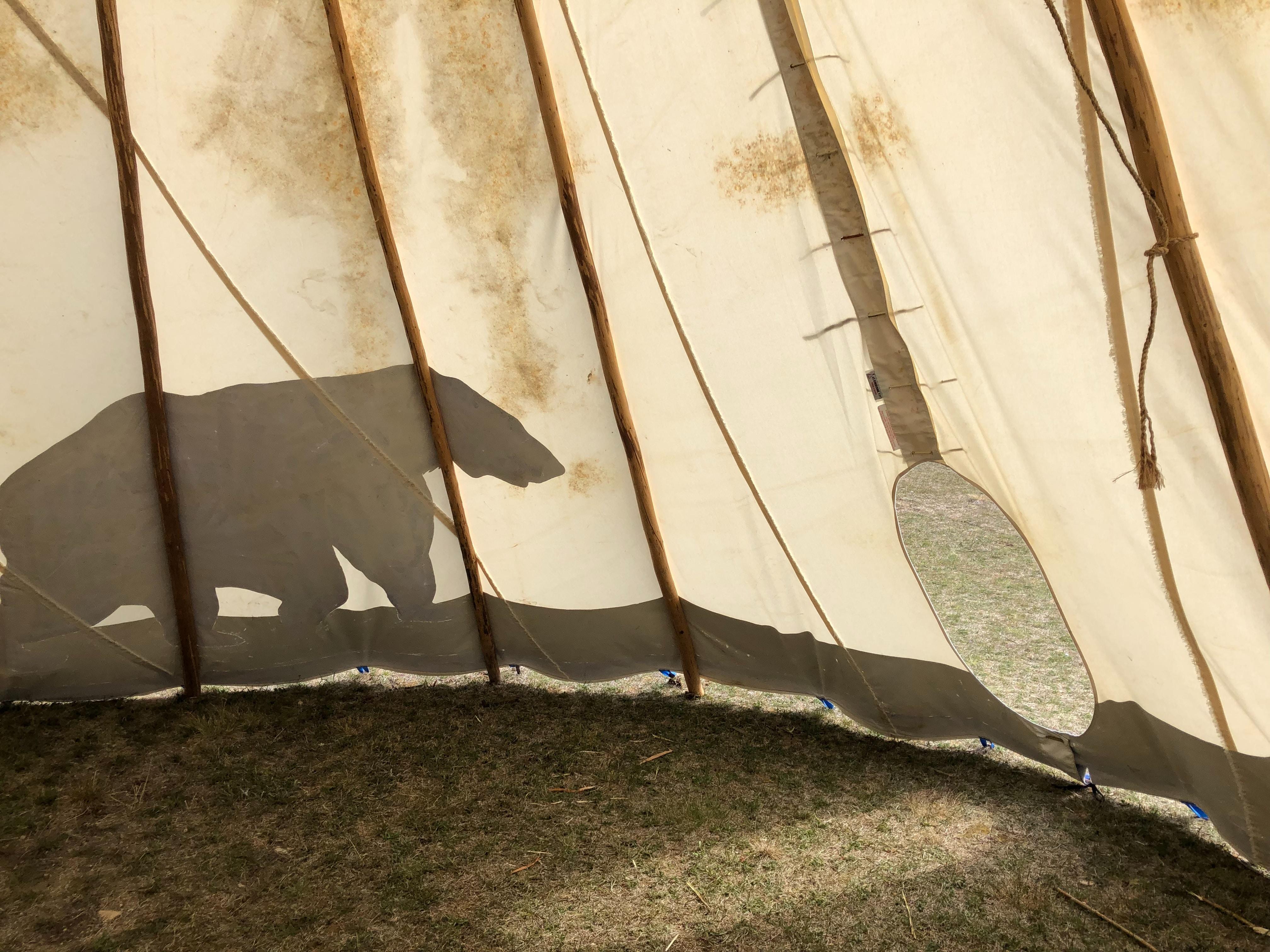 tenda da campeggio e orso