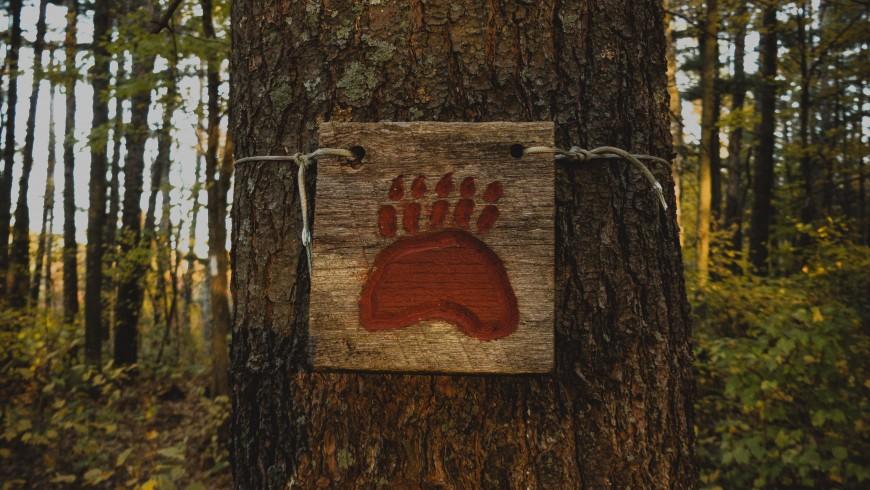 cartello in legno con l'impronta dell'orso