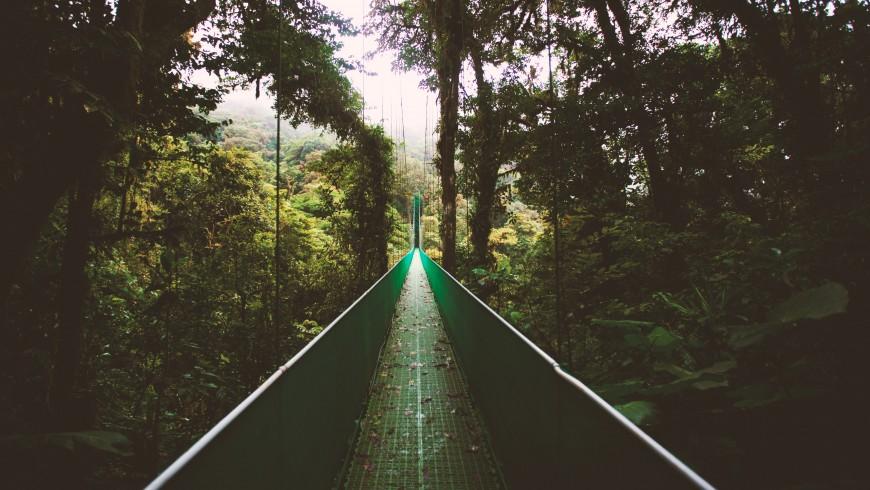 ponte sospeso nella giungla del Costa Rica
