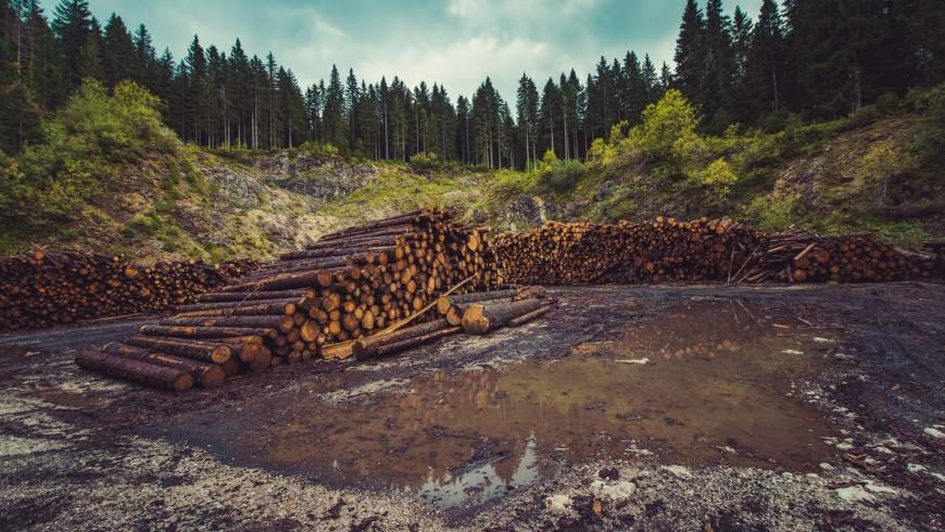 foresta dopo disboscamento