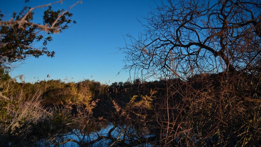 Oasi Le Cesine con alberi e il piccolo laghetto