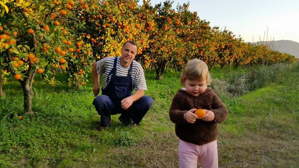 raccolta delle arance in Croazia