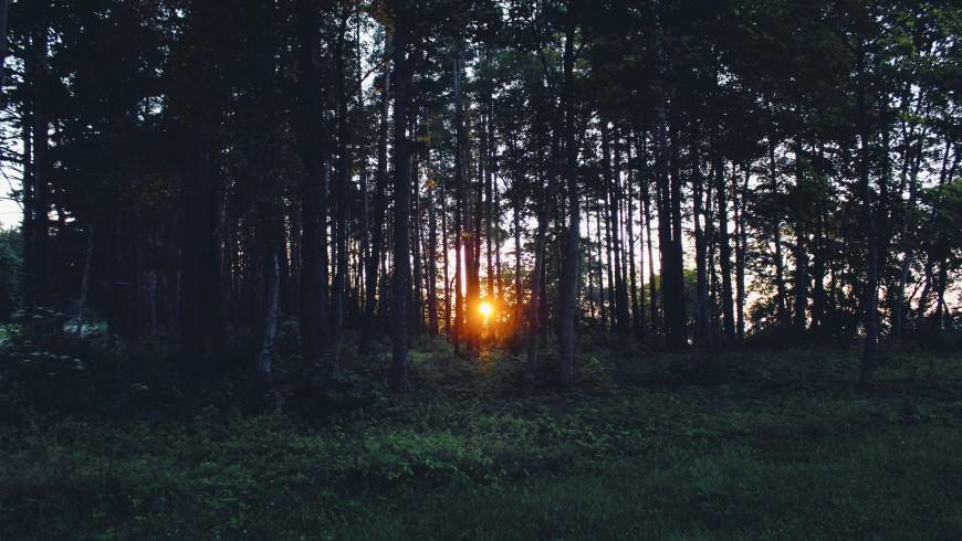 alberi con tramonto