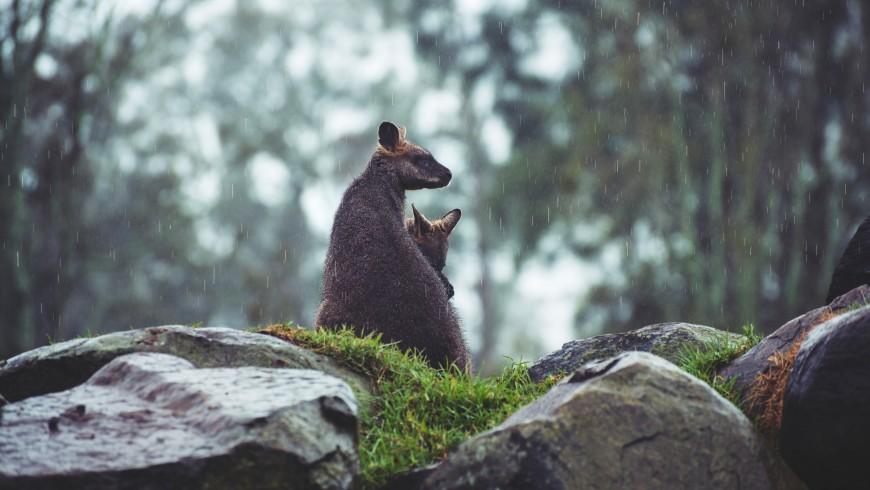 animali sulle rocce