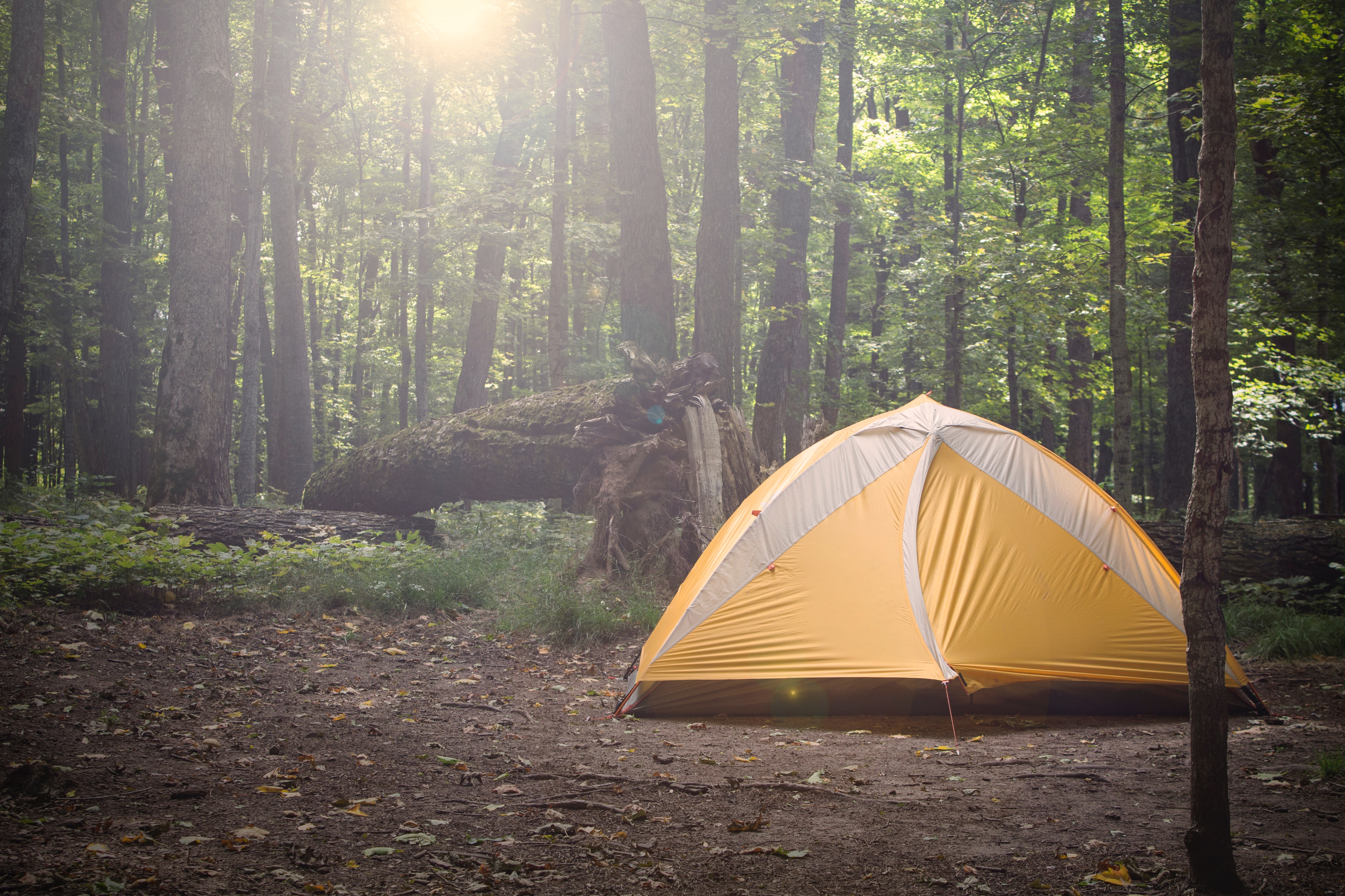 camping tent in a clearing