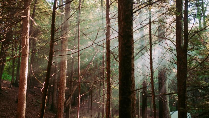 luce filtra tra gli alberi