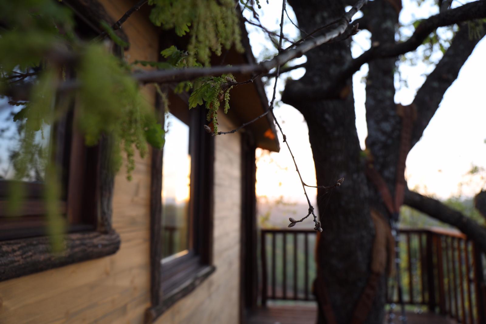 casa sulla quercia
