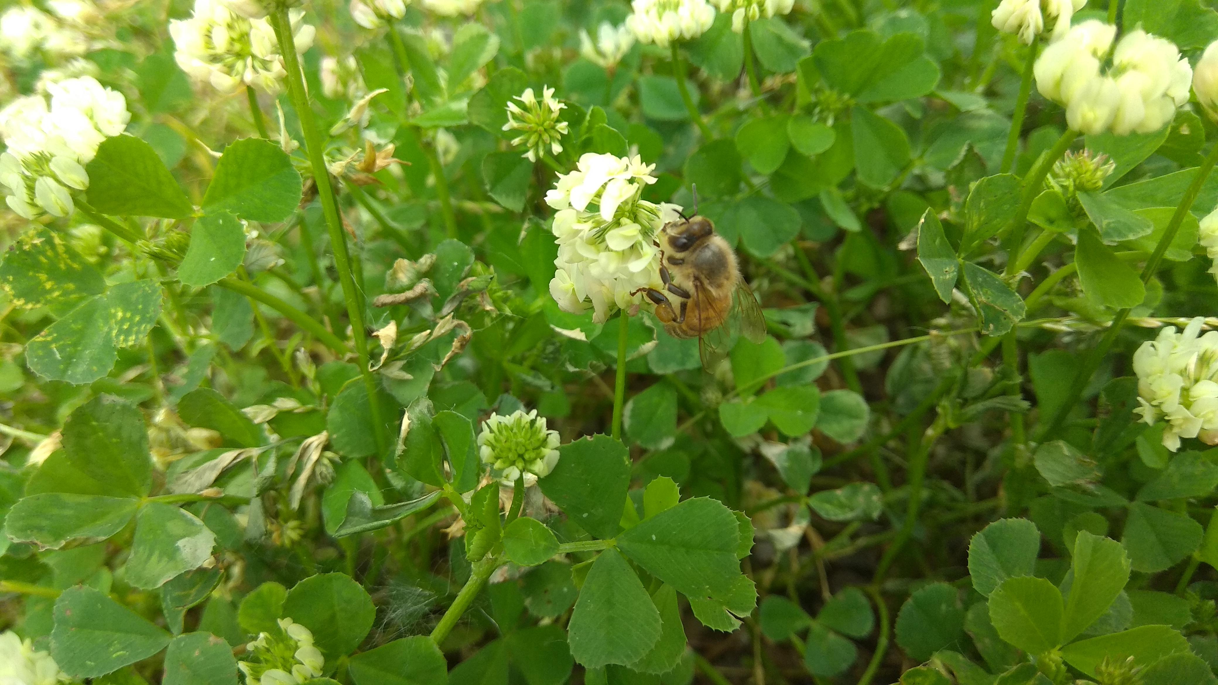 ape sopra un fiore