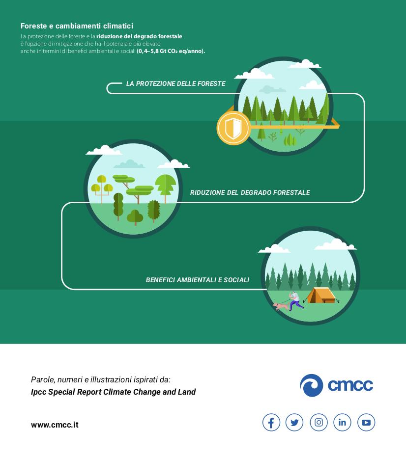 Il rapporto evidenzia l'importanza delle foreste nel contrastare i cambiamenti climatici,