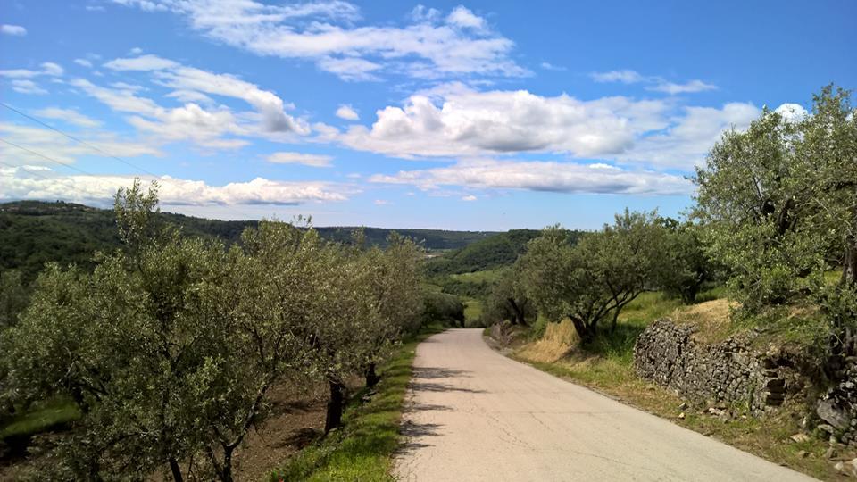 strada in mezzo agli ulivi