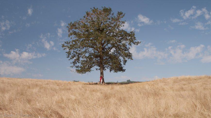 abbraccia un albero