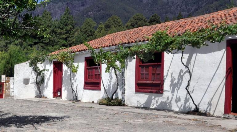 Tra i vigneti di Tenerife