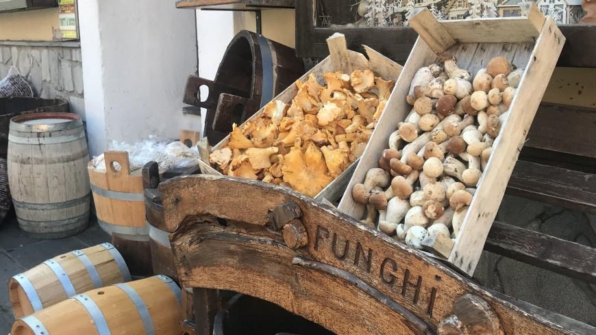 Funghi a San Severino Lucano