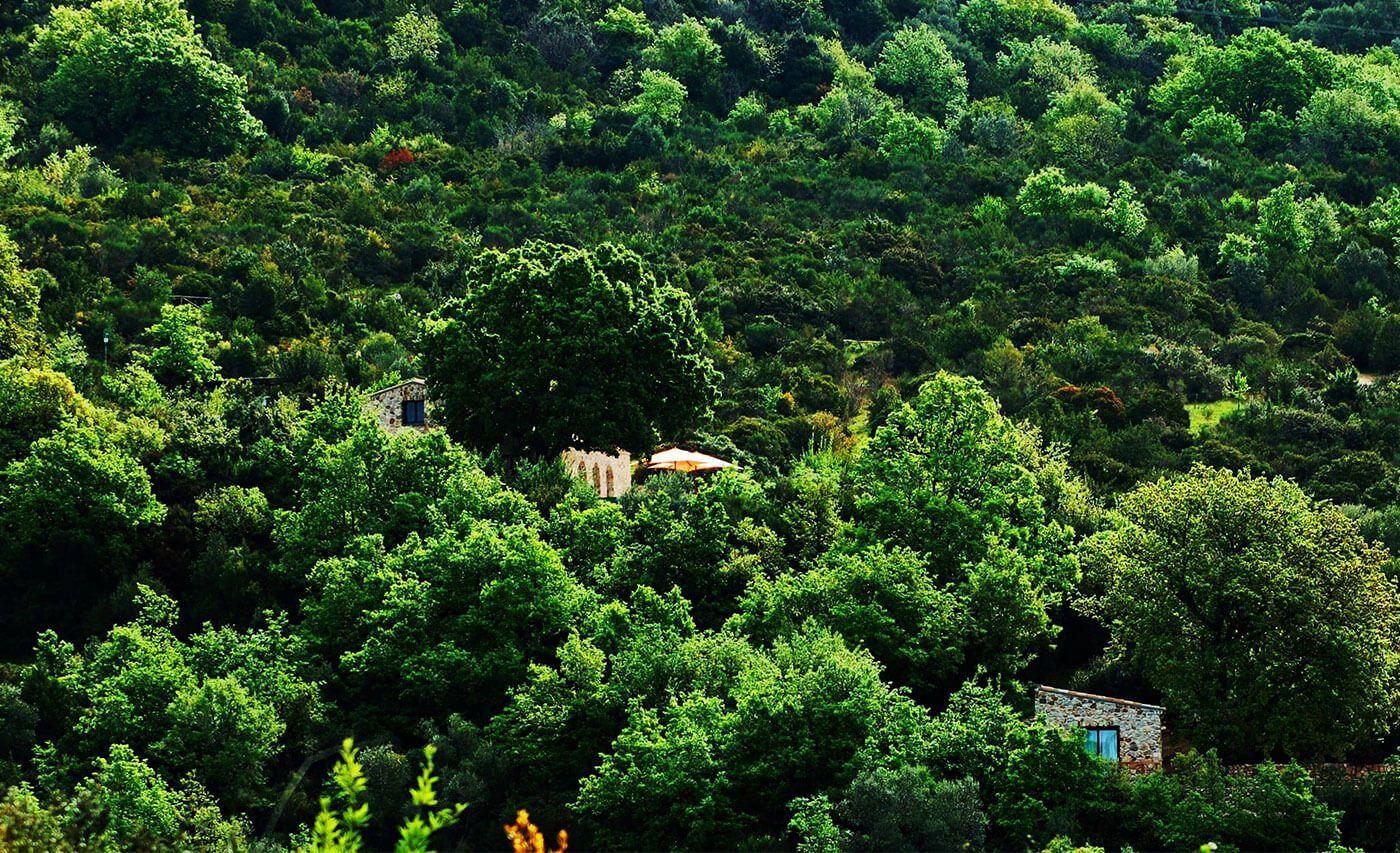 Il Cannito, edificio immerso nella natura verdissima del Cilento